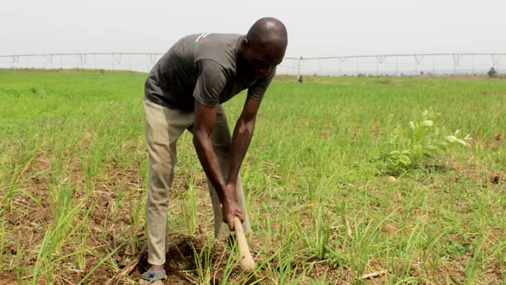 Lagos State Govt. targets 10,000 farmers to maximize its limited land resources for farming and value addition - BusinessAMLive