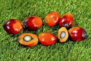 ndia's Palm oil import surges 8% as import activities resumes