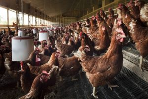 U.S. poultry shares soar after China ends ban on imports of U.S. meat