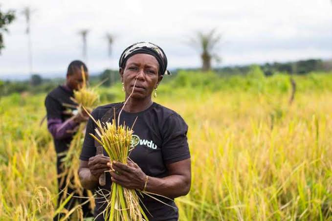 Extend border closure to five years, farmer urges FG