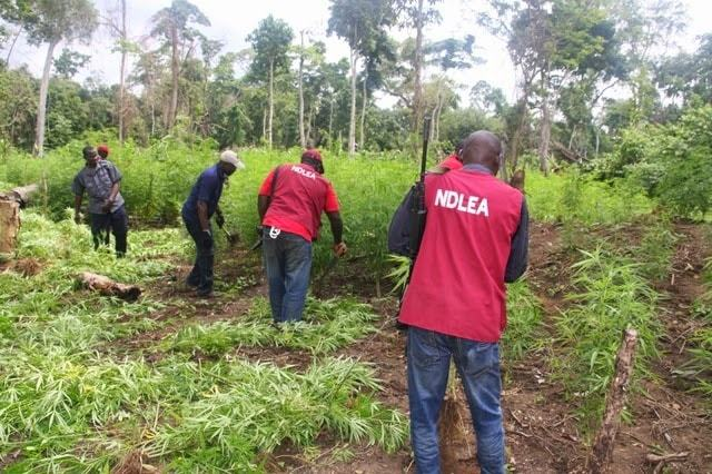 NDLEA, Imo Command, seizes 225kg of hard drugs in 2019