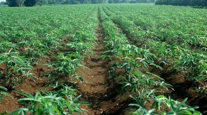 FG to site specialised agricultural market in Osun