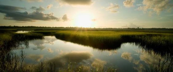 Florida To Buy Part Of Everglades To Protect Them From Oil Drilling