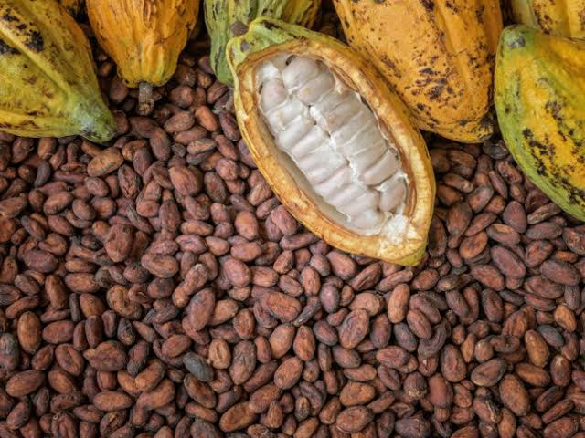 Cocoa futures prices may fall 6% by the end of the year due to increase production from top growers – analysts