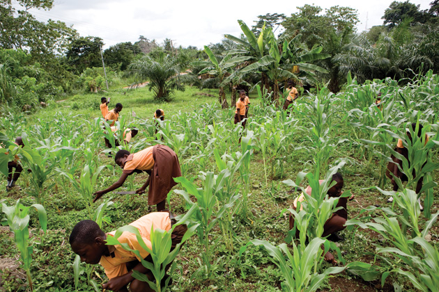 COVID-19: Anambra suspends N98.4m IFAD 2020 farm project