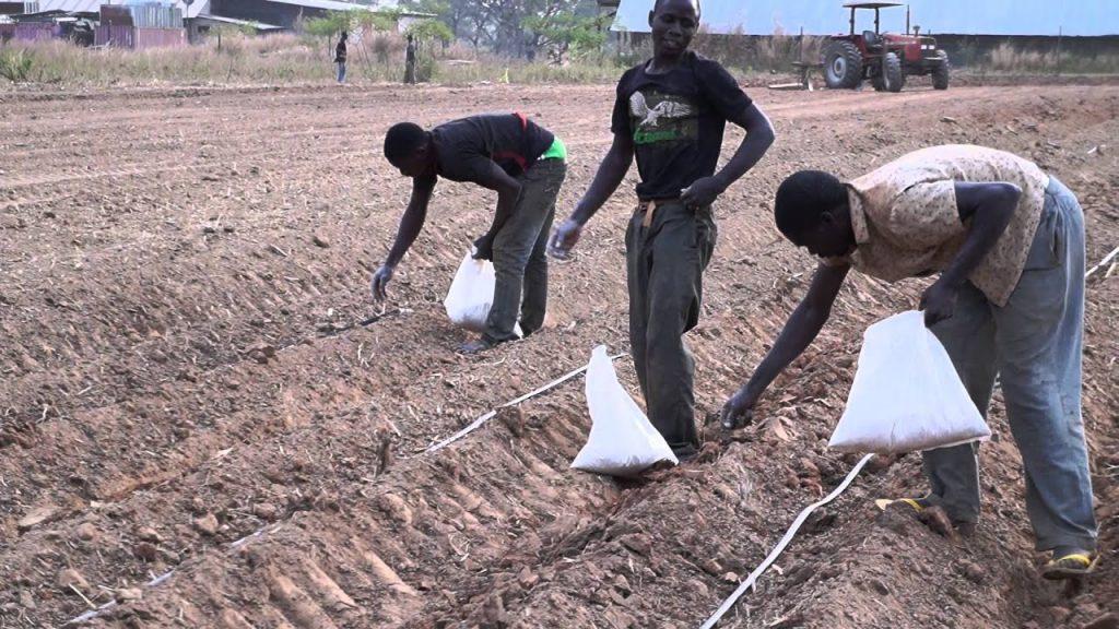 AFFM earmarks $2.2m as fertiliser subsidy for Nigerian farmers