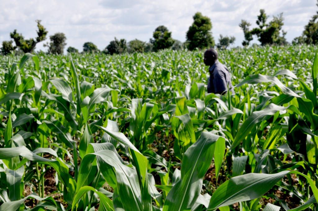 Villam Agric earmarks N3.5bn agricultural investment in Ekiti State