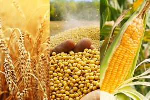 Nigeria's agro-commodities projected for global export market dominance