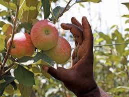 Apple stakeholders push more Nigerian production to checkmate $29.7m import bill