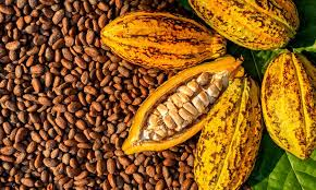 Nigeria's cocoa earnings put at N135bn in 2020 by Cocoa Research Institute