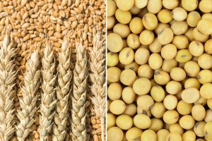 Wheat, soybean prices go separate ways amid weather concerns, soaring demand