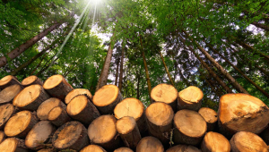 Abandoned timber industry: A goldmine seeking reformation