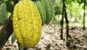 NIRSAL boosts cocoa exports with 50% CRG on N1.5bn loan