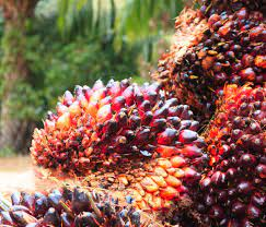 Expert underlines poor access to credit, technology for Nigeria's low oil palm output