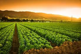 Agriculture still pulling weight in Katsina with N13bn revenue
