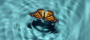 """How the """"Butterfly Effect"""" Can Harm Firm Performance"""